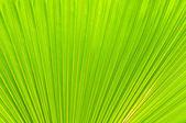 Palm leaf background — Stock Photo