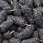 Blackberries background — Stock Photo #9476861