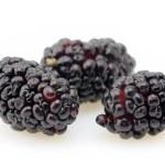 Blackberries closeup — Stock Photo