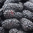 Blackberries background — Stock Photo