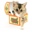 Kitty in treasure box — Stock Photo