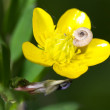 Stock Photo: Snail on flower of buttercup