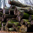 Stock Photo: Heap of trunks