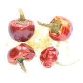 Peperoni rossi secchi isolati con semi — Foto Stock
