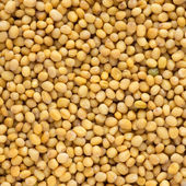 Close up of mustard seeds — Stock Photo