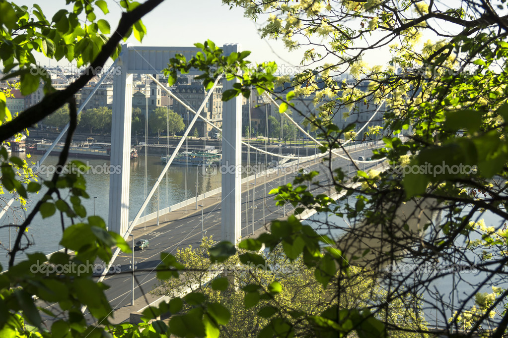 Spring shot of the Elizabeth Bridge, Budapest — Stock Photo #10555011