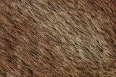 Abstract brown fur background (texture) — Stock Photo