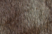 Abstract fur background (texture) — Stock Photo