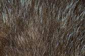 Abstract light brown mink fur background (texture) — Stock Photo