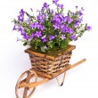 Violet flowers in basket — Stock Photo
