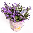 Violet flowers in vase — Stock Photo