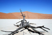 Dead Valley Namibia — Stock Photo