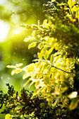 Plants — Stock Photo