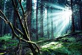 Herdem yeşil orman — Stok fotoğraf