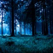 Night forest — Fotografia Stock  #8958557
