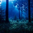 Night forest — Stock Photo #8958560