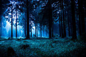 Night forest — Stock Photo