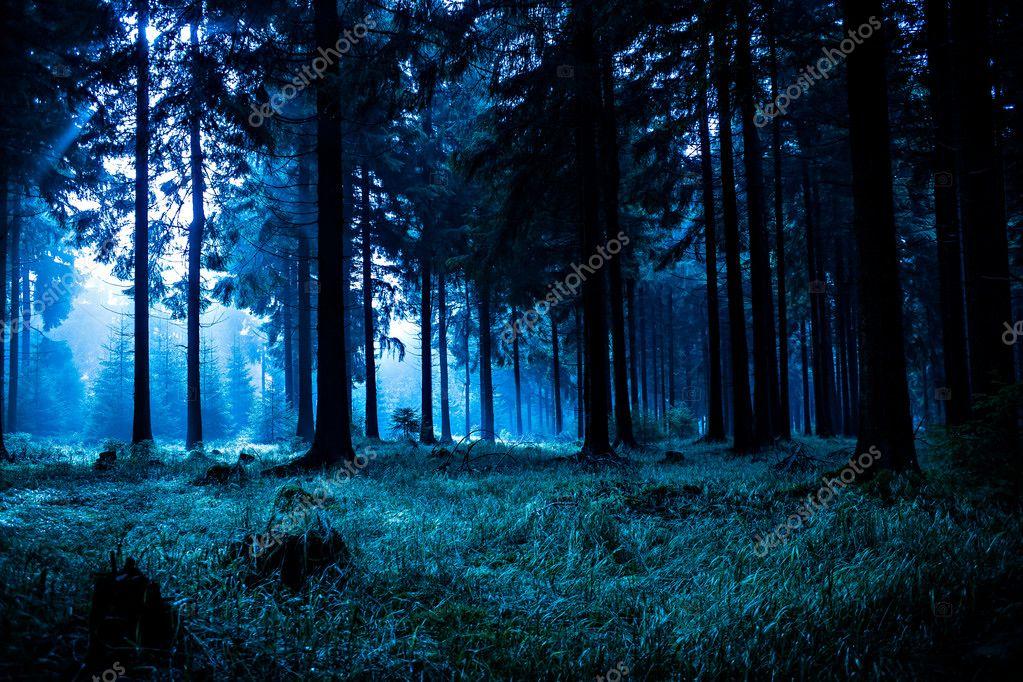 Фотообои Ночной лес