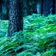 Stock Photo: Night forest