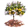 Money tree — Stock Photo #9196184