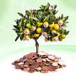 Money tree — Stock Photo #9196232