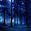 Night forest — Stock Photo #9348411