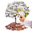 Money tree — Stock Photo #9363104