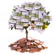 Money tree — Stock Photo #9714706