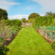 Stock Photo: Vegetable garden