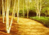 Woodland — Foto Stock