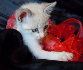 Little kitten and red ribbon — Stock Photo