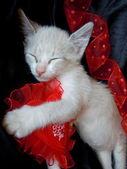 Pet's valentine's dream — Stock Photo