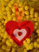 Red heart and mimosa — Stock Photo