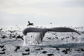 Humpback whale's tail — Stock Photo