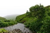 Foggy creek — Stock Photo