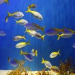Tropical fishes — Stock Photo #10678577