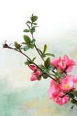Branch of flowers — Stock Photo
