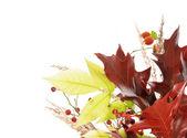 Arreglo de otoño — Foto de Stock