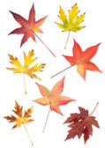 Colorful leaves — Stock Photo