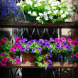 Stock Photo: Beautiful flowers
