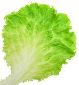 Lettuce — Stok fotoğraf