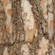 Bark — Stock Photo #10623862