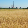 Wheat field and chimneys of factories — Stock Photo #8865727