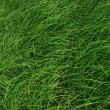 Green Grass — Stock Photo #8865755
