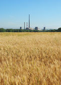 Wheat field and chimneys of factories — Stock Photo