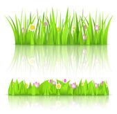 Green grass with flowers — Stock Vector