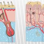 Human skin and hair anatomy illustration background vector — Stock Vector