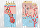 Human skin and hair anatomy illustration background vector — 图库矢量图片