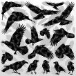 Royalty-Free Stock Vector Image: Crow and feathers silhouettes illustration collection background