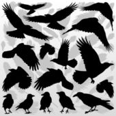 Crow and feathers silhouettes illustration collection background — Stock Vector